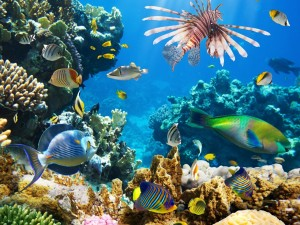 Un espectacular mundo subacuático