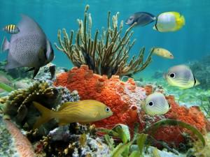 Vistosos peces y corales en el fondo del mar
