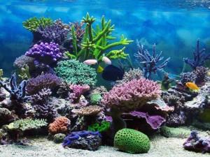 Corales y peces en un acuario