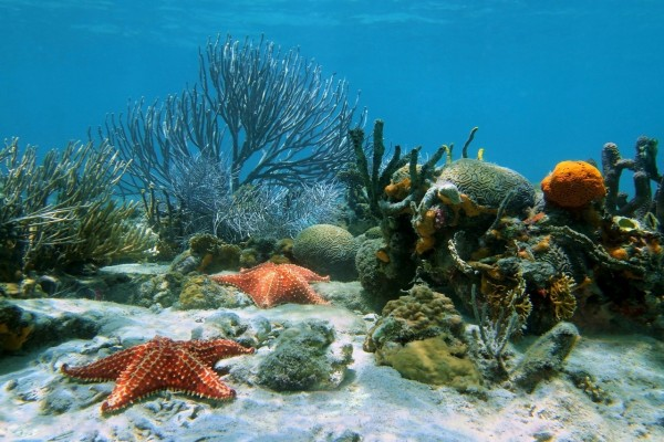 Estrellas de mar bajo el agua