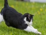 Un gato estirándose en la hierba