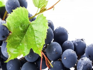 Sabrosas uvas negras