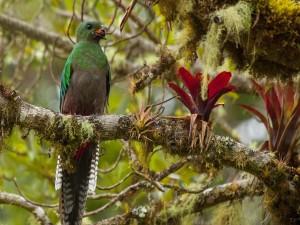 Hermoso pájaro comiendo sobre la rama del árbol