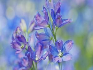 Delicadas flores de color lila y azul
