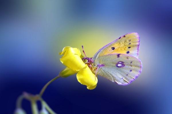 Delicada mariposa sobre una flor amarilla
