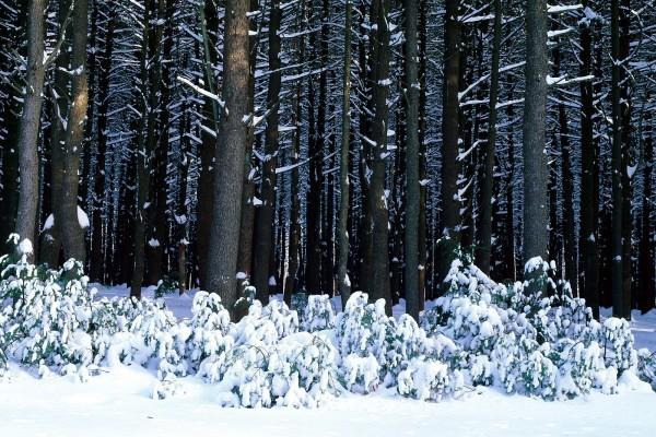 Nieve en el suelo y sobre las ramas de los árboles