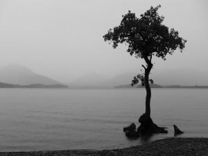 Árbol solitario en la orilla