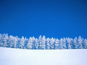 Postal: Cielo azul sobre el paisaje nevado