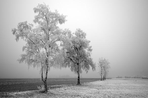 Un bonito paisaje nevado en blanco y negro