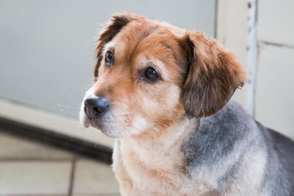 Un precioso perrito con la mirada triste