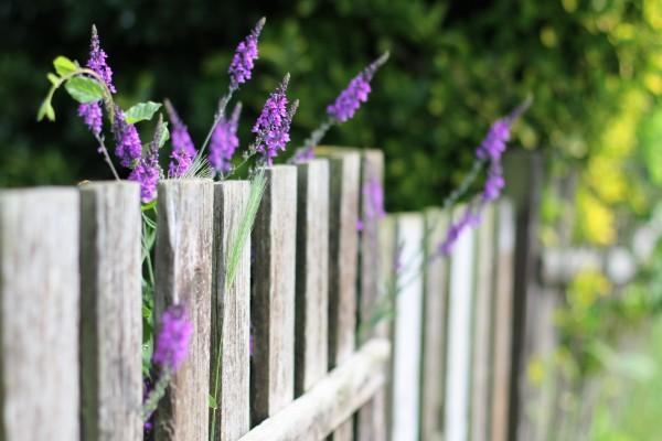 Flores lila junto a una valla