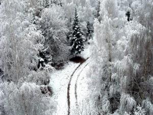 Vista de un camino en el bosque nevado