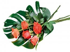 Postal: Rosas sobre una gran hoja verde