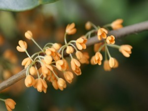 Pequeñas flores de color naranja creciendo en la rama