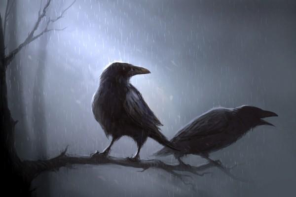 Cuervos negros bajo la lluvia
