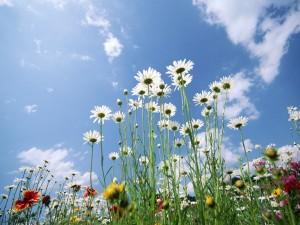 Flores silvestres y un bonito cielo