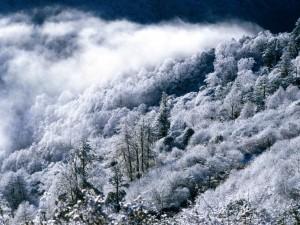 Niebla sobre los árboles blancos