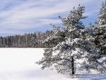 Nieve en un paraje con árboles