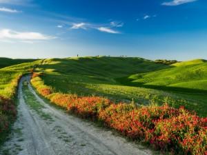 Postal: Bellas flores a la orilla del camino