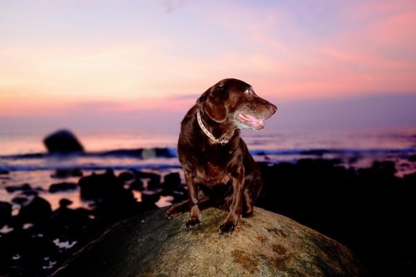 Un perro observando el espectacular paisaje desde una piedra