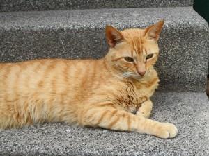 Un bonito gato tumbado en el peldaño de las escaleras