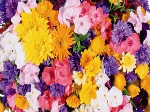 Postal: Coloridas y variadas flores
