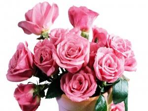 Rosas en una maceta