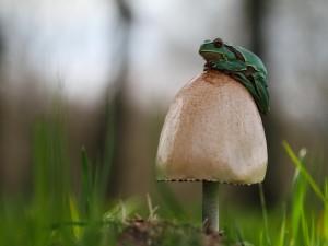 Postal: Una rana sobre una seta