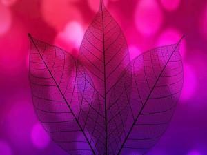 Hojas transparentes con un fondo color fucsia