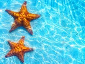 Estrellas de mar en el agua azul