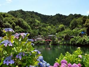 Postal: Bellas hortensias junto al lago