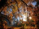 Bajo las ramas de un árbol en otoño