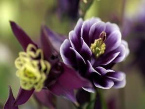 Una bonita flor de color morado