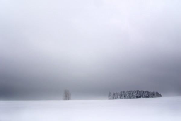 Niebla sobre la nieve