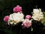 Peonías blancas y rosas en una cesta decorativa