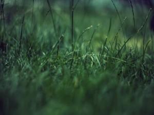 Postal: Briznas de hierba verde