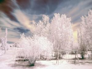 Árboles blancos en el parque