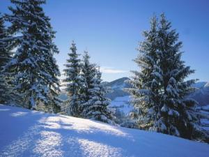 La luz del sol sobre la nieve