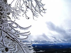 Nieve sobre las ramas del árbol