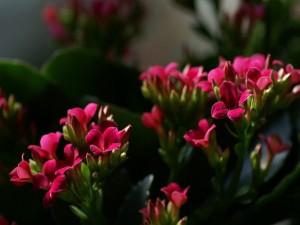 Postal: Pequeña flores de color fucsia en la planta