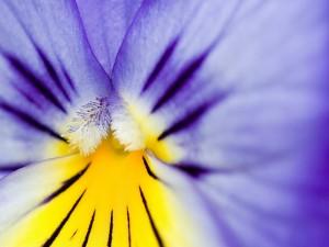 El centro amarillo de una flor