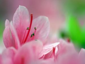 Postal: Flores con finos pétalos