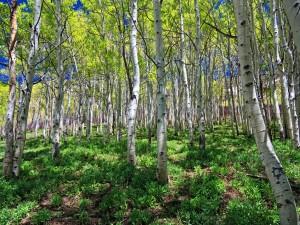 Árboles y hierba verde