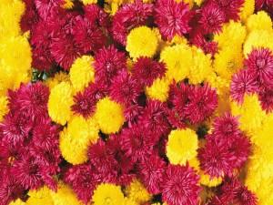 Flores fucsias y amarillas