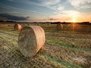 Puesta de sol en un campo con rollos de forraje