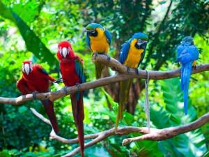 Loros multicolores en una rama