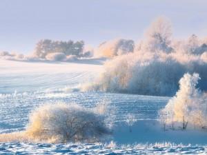 Una mañana de invierno cubierta de nieve