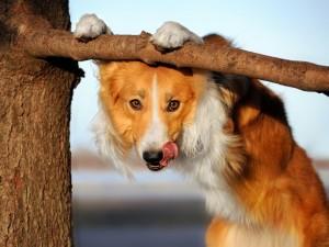 Postal: Perro jugando con la rama del árbol