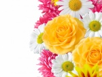 Bonitas flores de varios colores