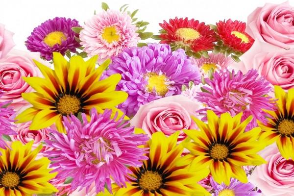 Variedad de coloridas flores